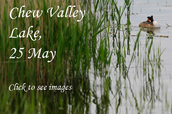 Chew Valley Lake photo link